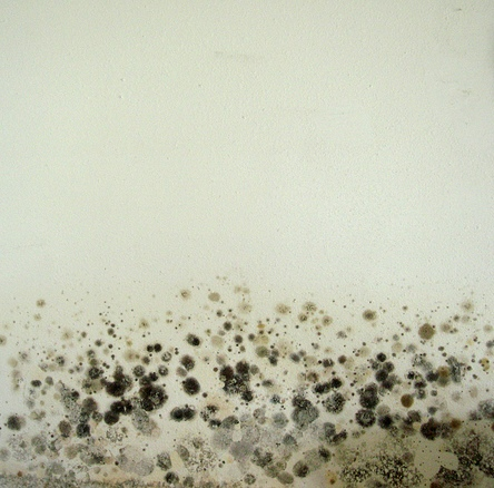 mold (mould) on a wall