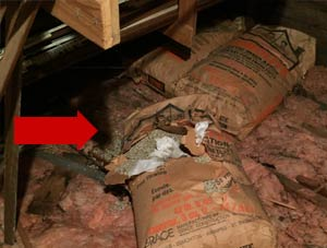 Vermiculite Attic Insulation Containing Asbestos